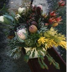 flowers at UCSC Arboretum